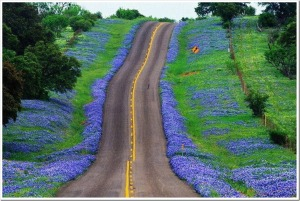 Texas-hill-country-blue_thumb