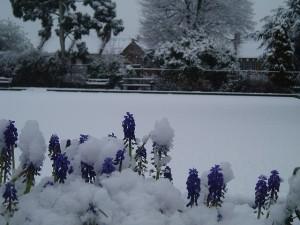 flowers.snow