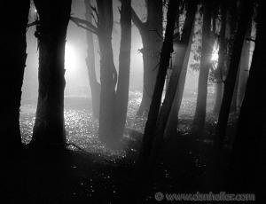nite-tree-shadows-2-big