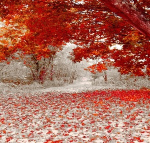 Autumn.snow