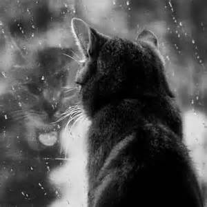 Cat rainy day