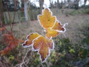 November leaf